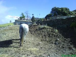 Reitstall Sierra Trails, Reiten in Andalusien